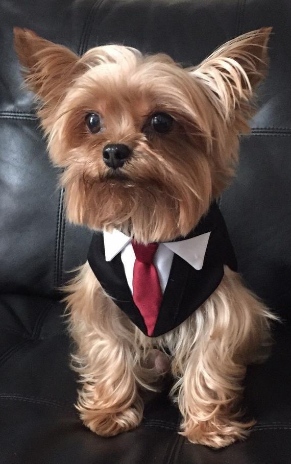 Photo of Esmoquin formal negro para perros, hecho a medida, ajuste personalizado, atuendo de boda de mascotas, lazo de color de su elección para que coincida con la fiesta de bodas.