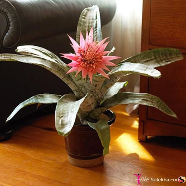classy pictures of cactus house plants. houde plants photos  house cactus lily decorate your home with