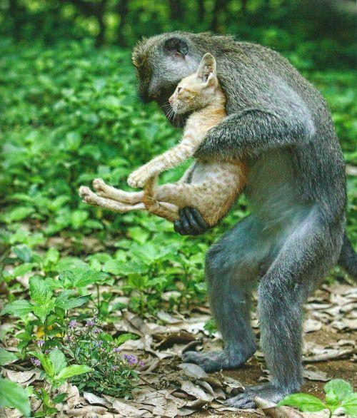 Ungewöhnliche Tierfreundschaften II #gingerkitten