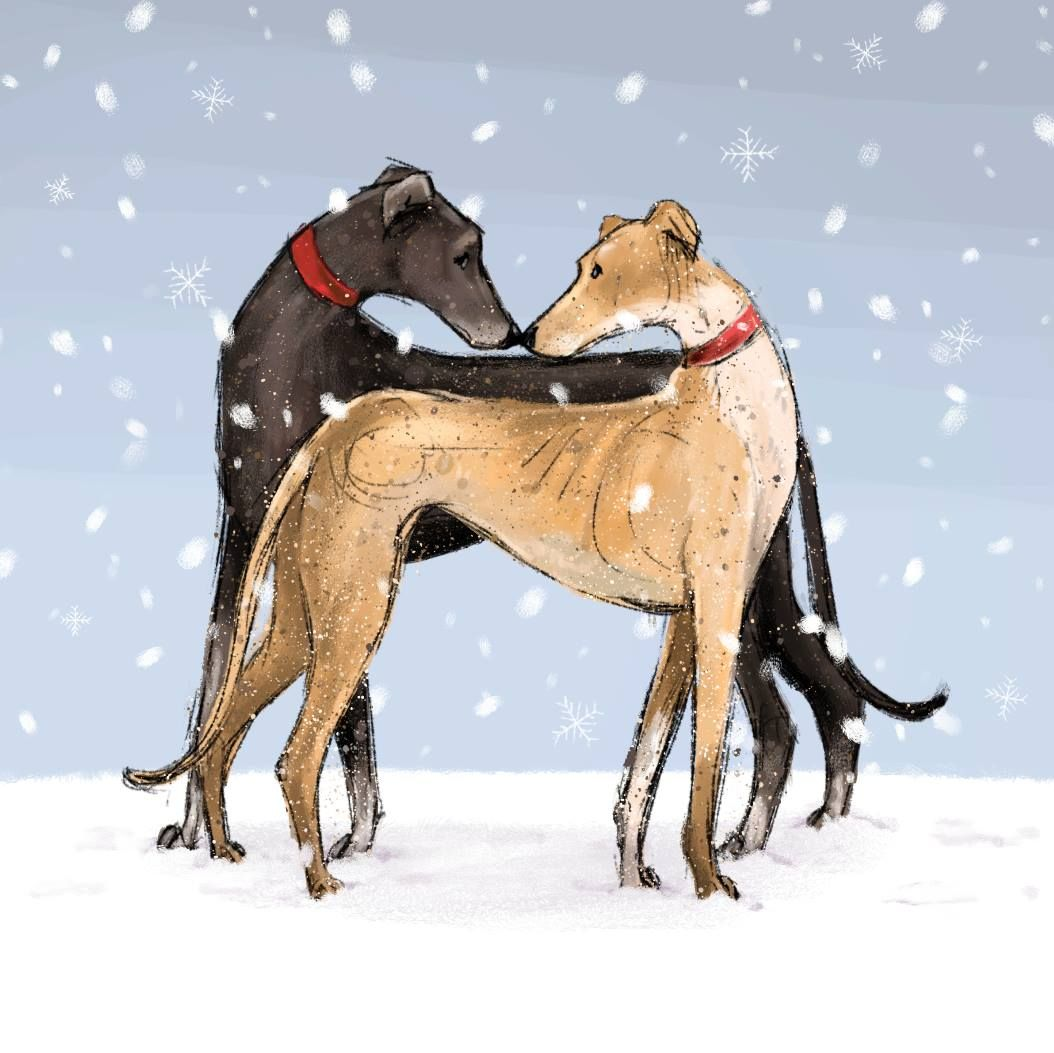 Pin By Ashley Crist On Greyhounds Pinterest Whippets