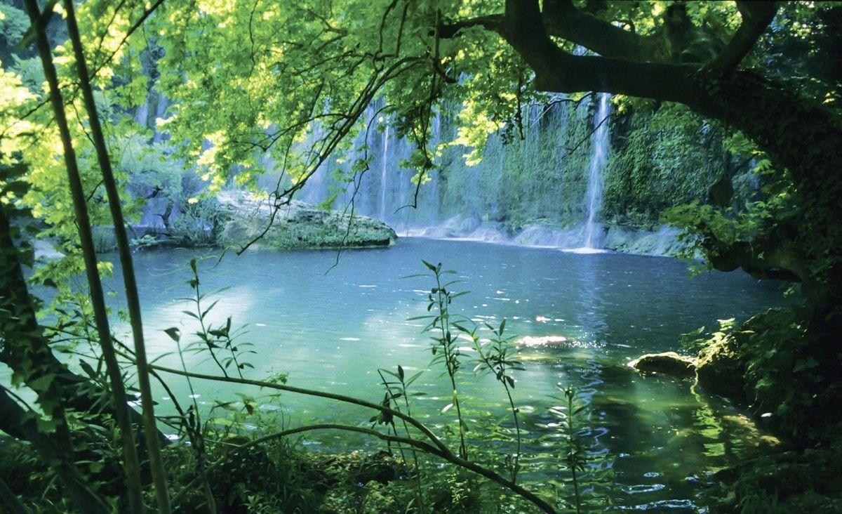 Fototapete Wald Mit See Online Bei Poco Kaufen Fototapete