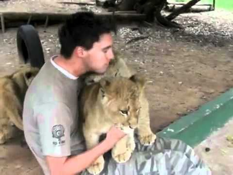 On his last day at a lion park, an employee gets a hug filled goodbye from the tiniest members of the park's pride. So cute!