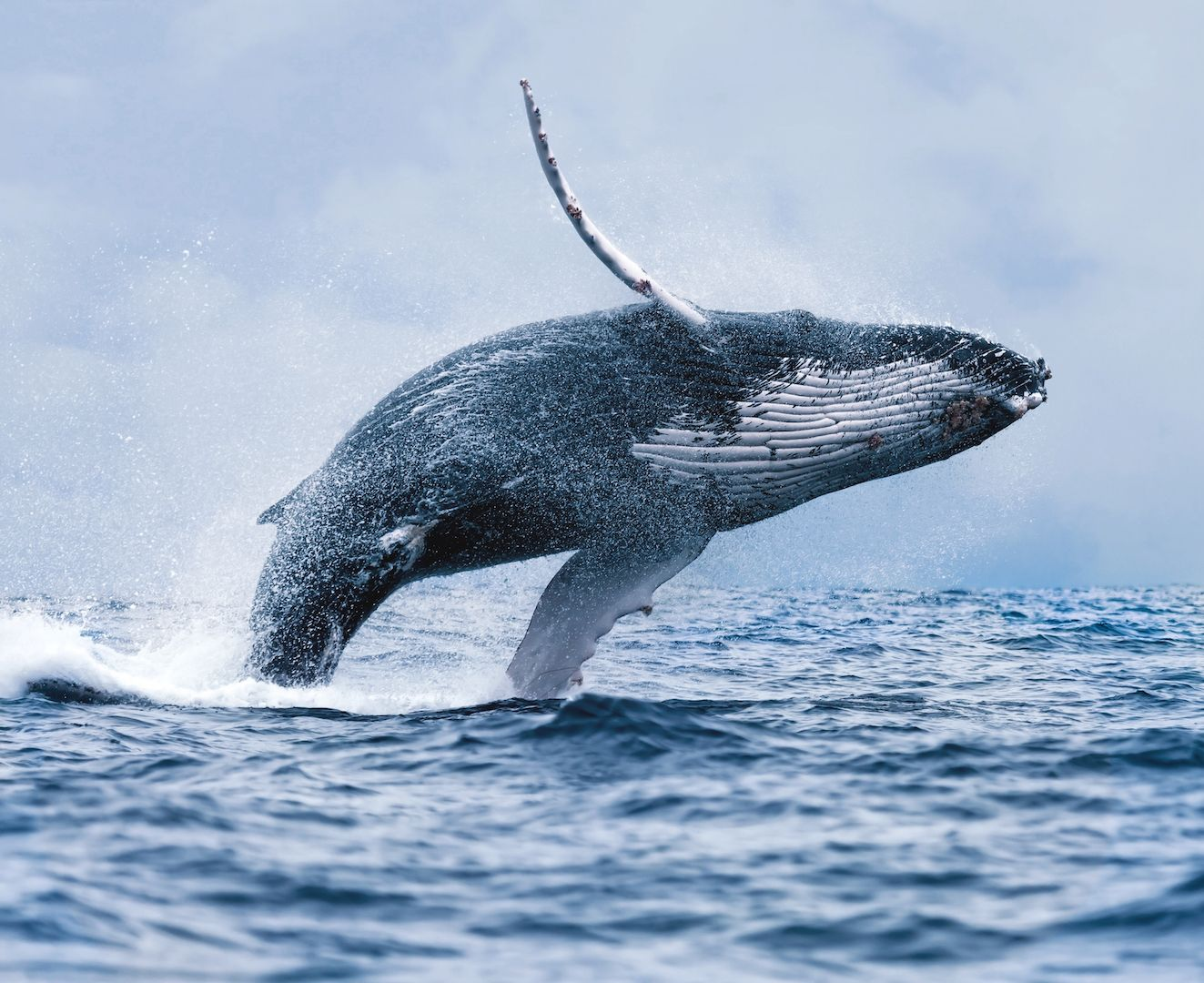 Best Value Whale Watching Trip from Reykjavik | Whale