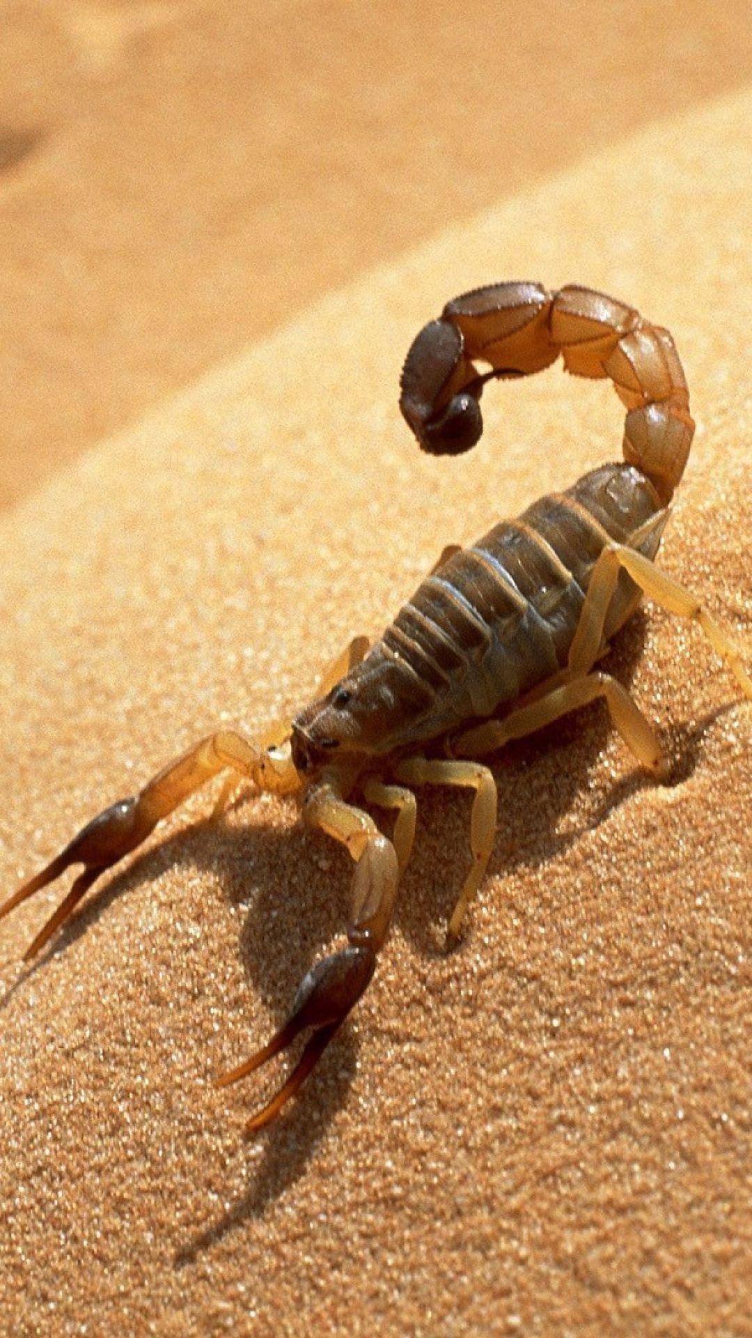 ˚Scorpion Scorpion, Animals, Beautiful bugs