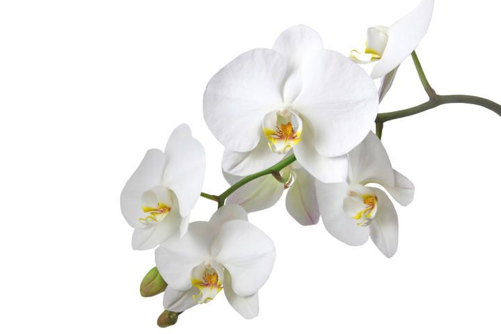 Exposition D Orchidees Orchidee Orchidee Blanche Fleur Orchidee