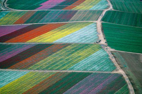 Tulip Fields -- The Netherlands, seen it in person!!!!