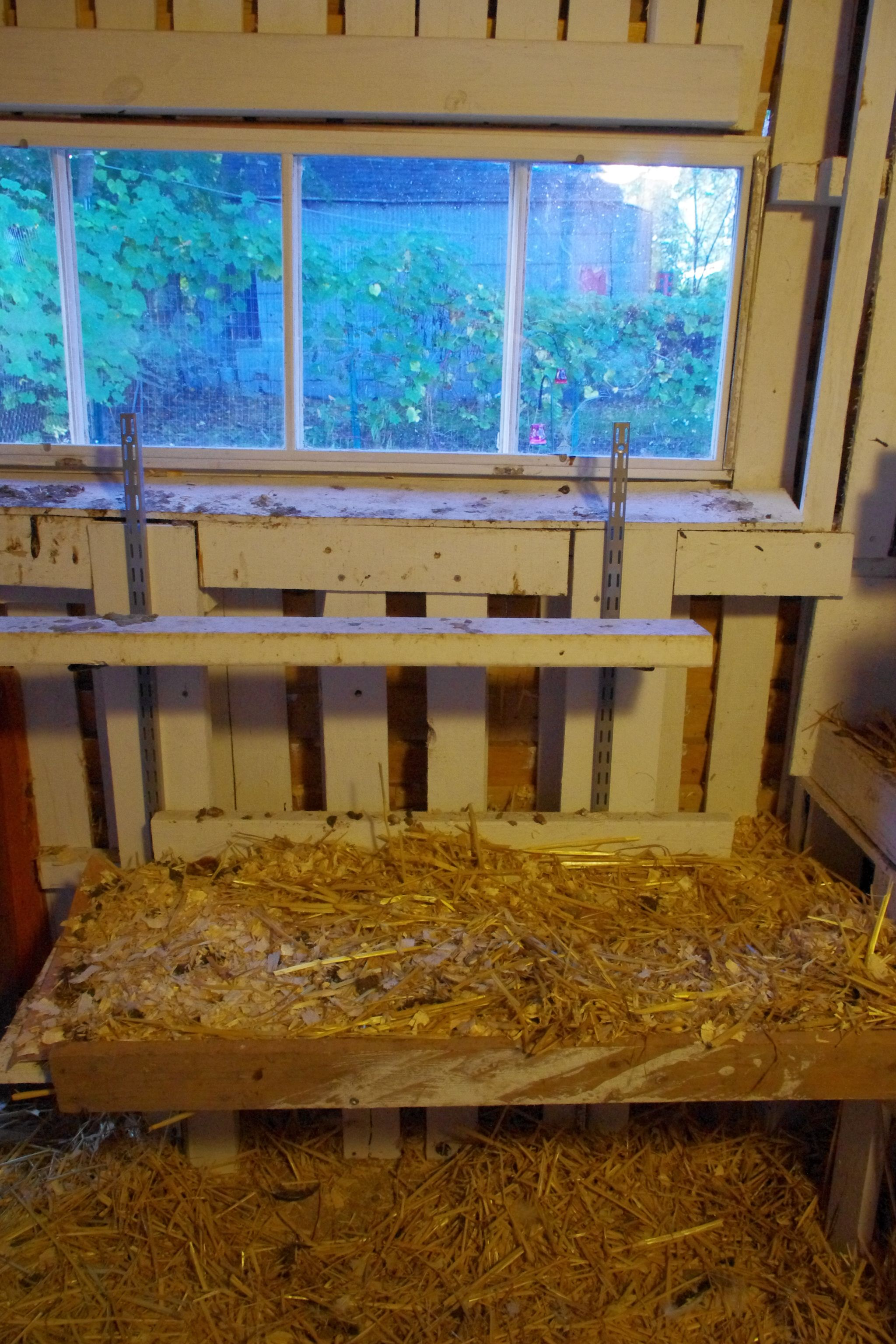 Inside The En Coop South Face Boards Covered In Removable Piece Of Vinyl Then Sprinkled With Wood Chips Hay