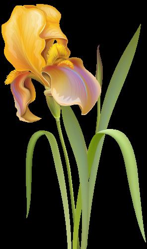 Iris Flower Png Clip Art Iris Flowers Digital Flowers Wildflower Drawing