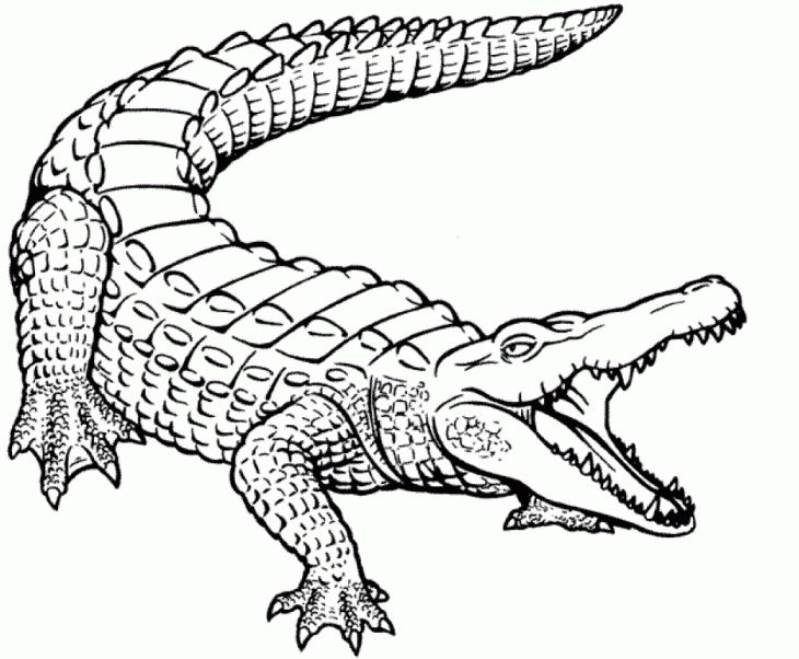 Realistic crocodile coloring page free printable Animal Coloring