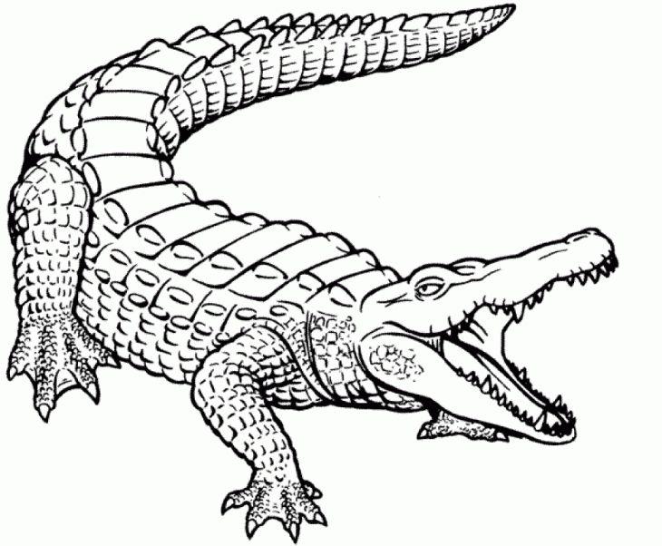 Realistic Crocodile Coloring Page Free Printable Letscolorit Com Dessin Crocodile Animaux Dessin