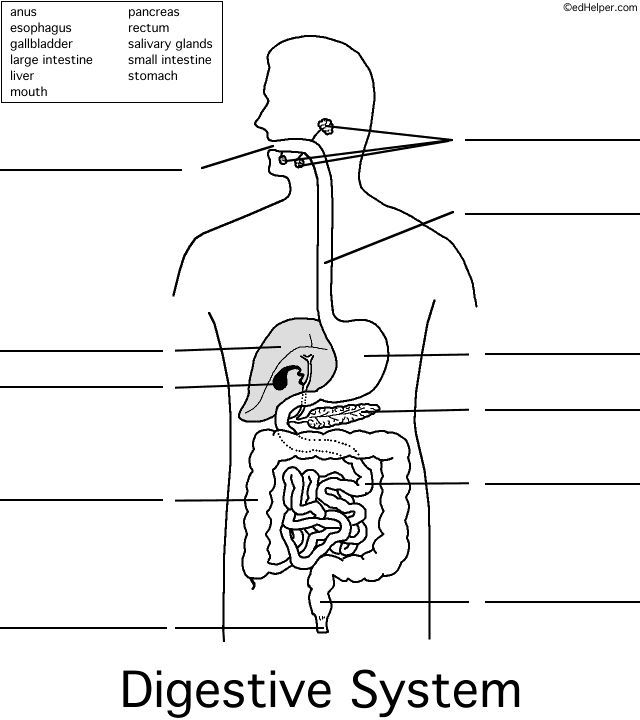 Image Result For Anatomy Labeling Worksheets Digestive System