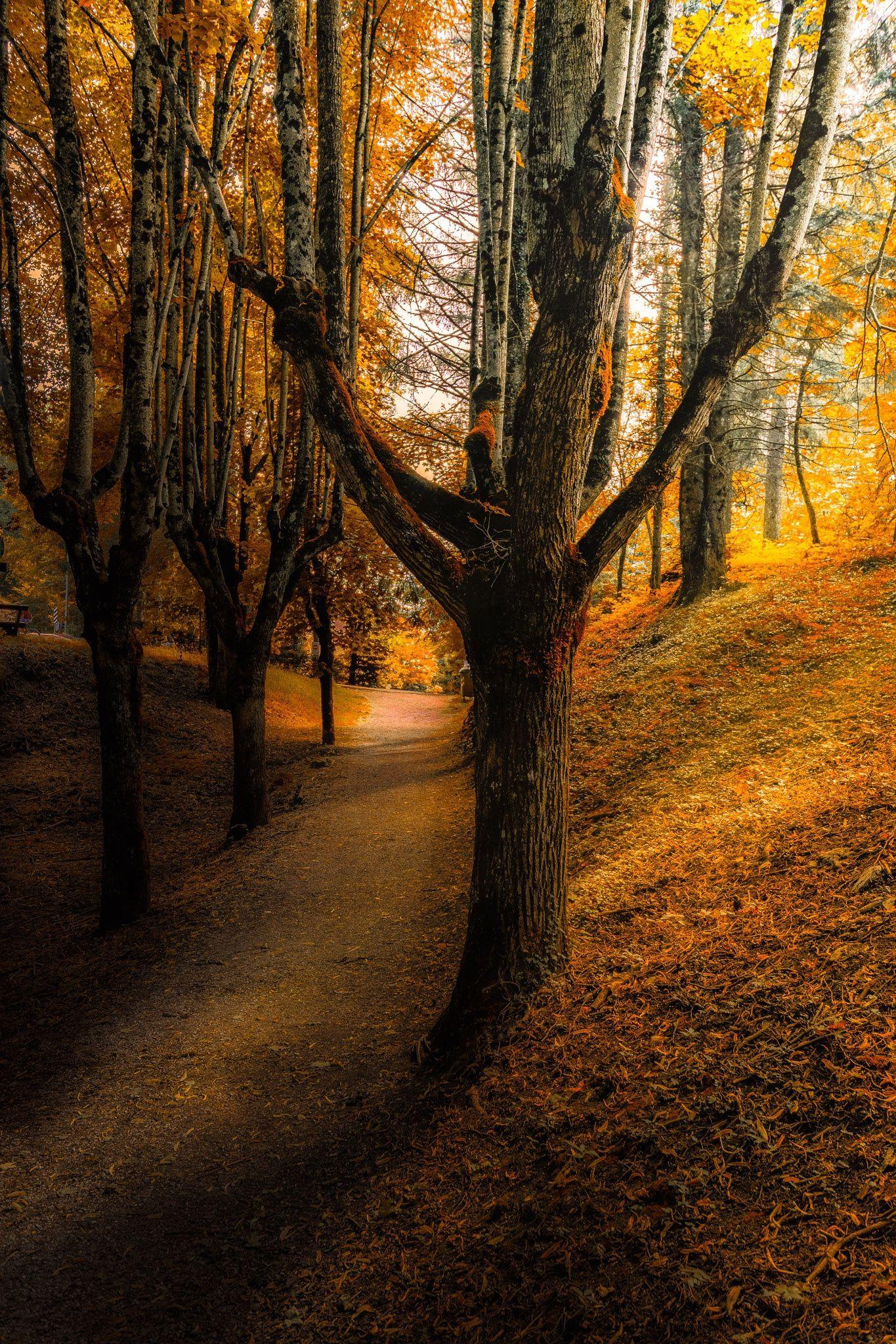 Path Into Autumn Forest Tree Landscape Nature