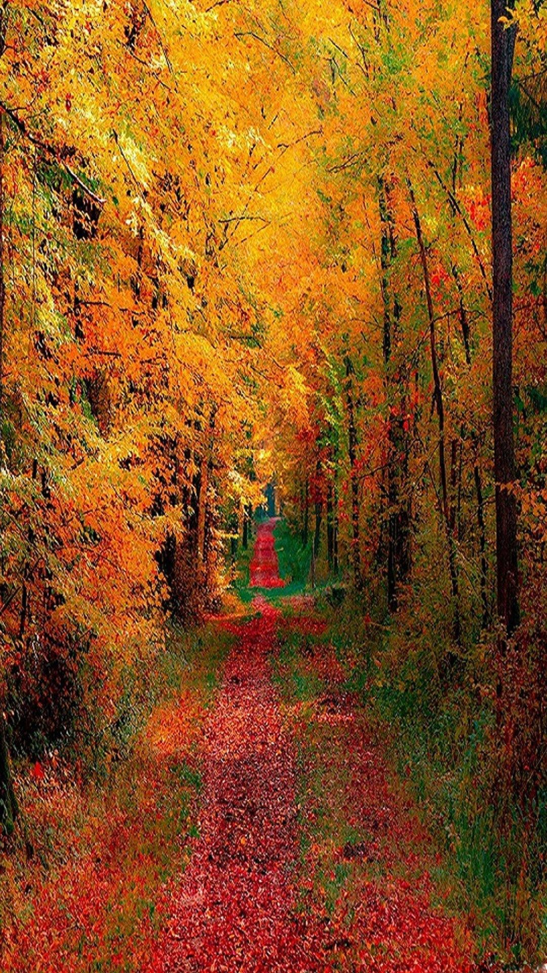 Free Fall Wallpaper For Iphone Fall Background Free Fall Wallpaper Nature