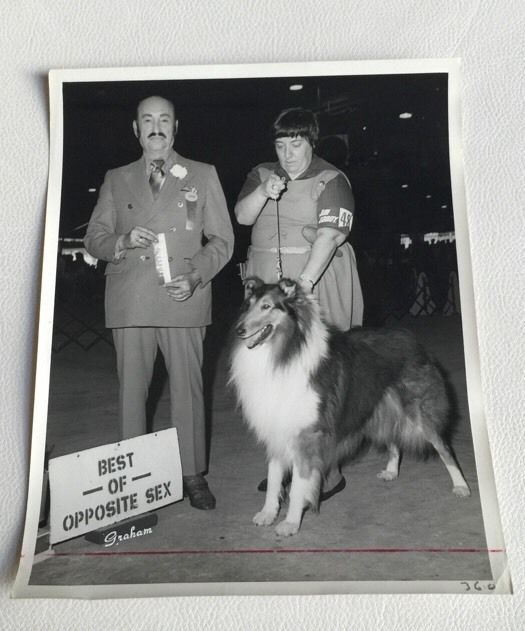 Set of 2 Vintage Stills Set #3 Lassie Photographs Photos Collector's Items