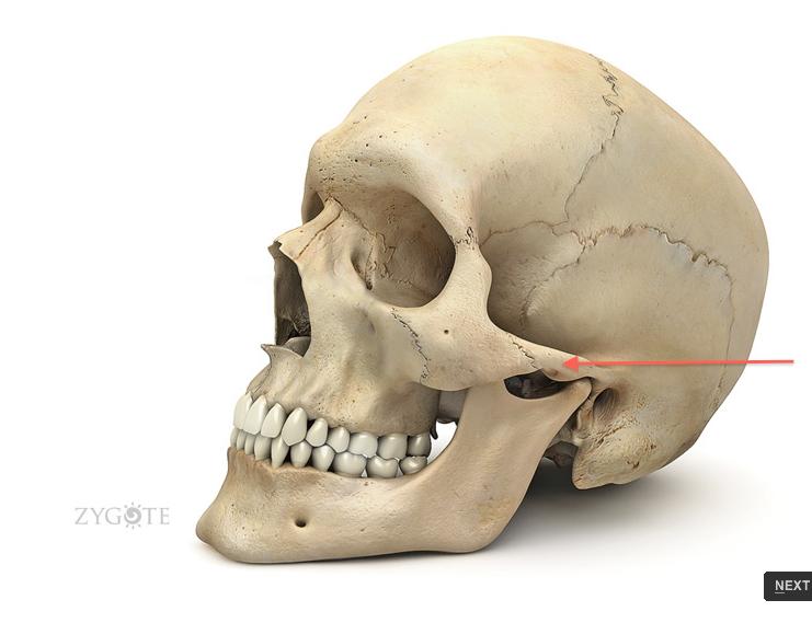 zygomatic process of the temporal bone zygomatic arch | Anatomy ...