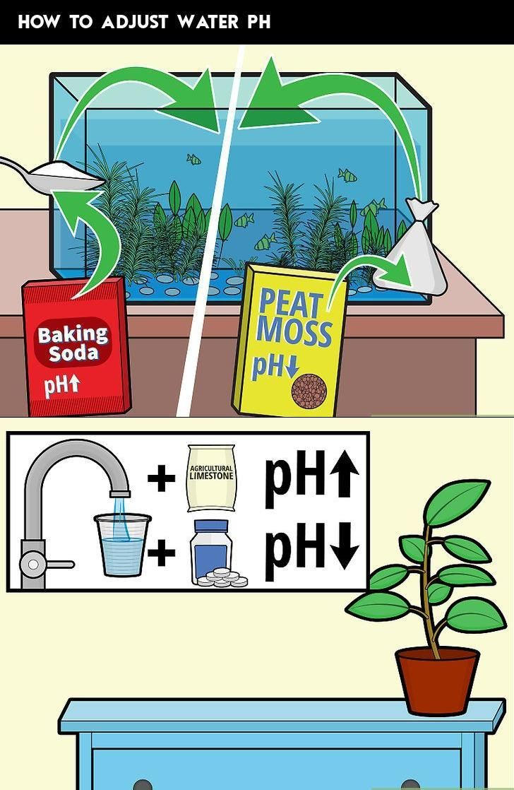 Index of pool supplies local plant nursery water