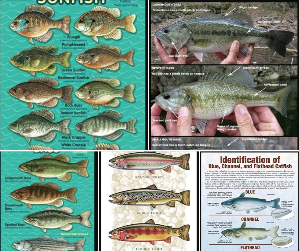 Fishing Charts for Identifying the Different Species of # ...