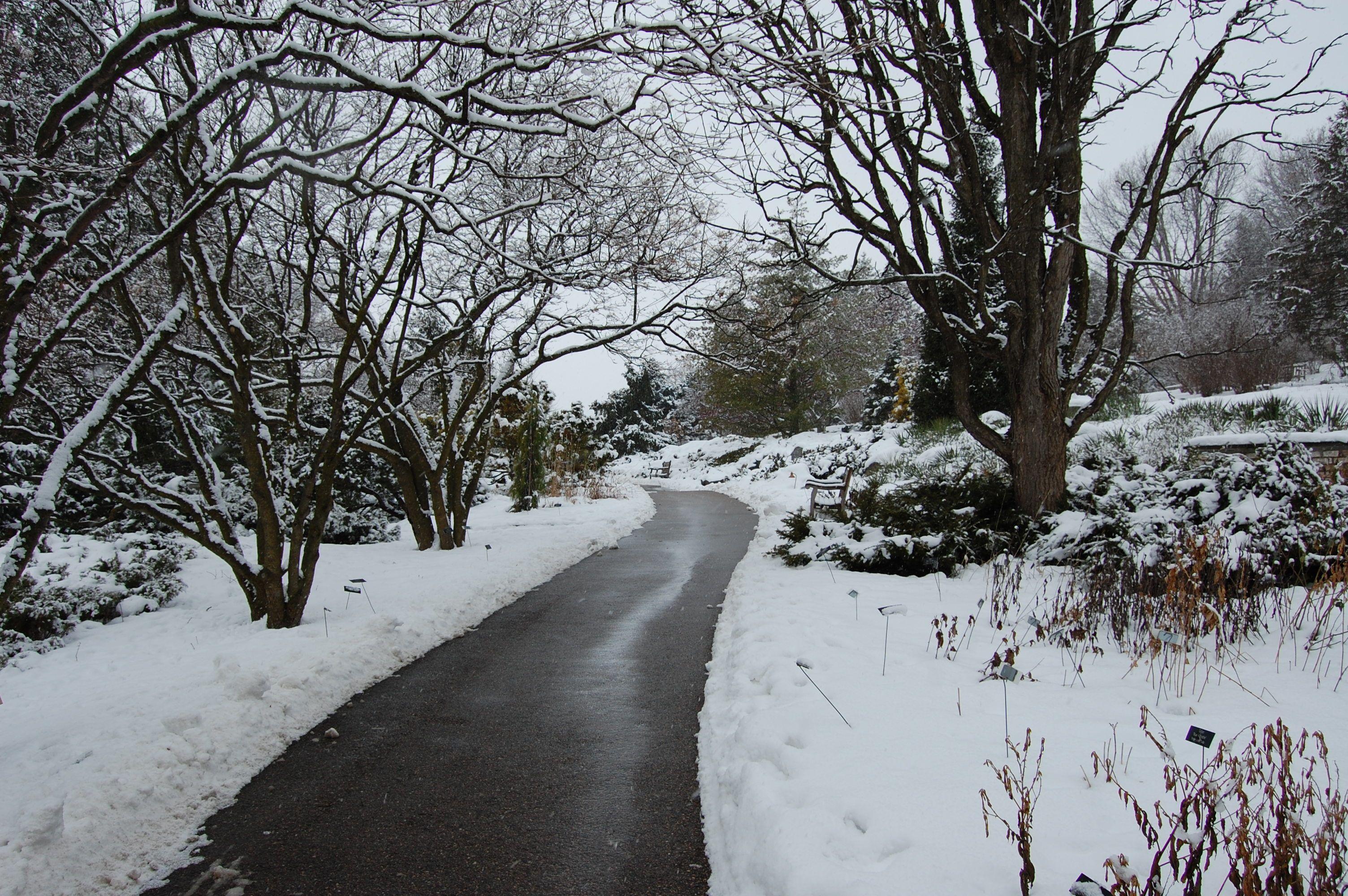 a winter wonderland here at the minnesota landscape arboretum