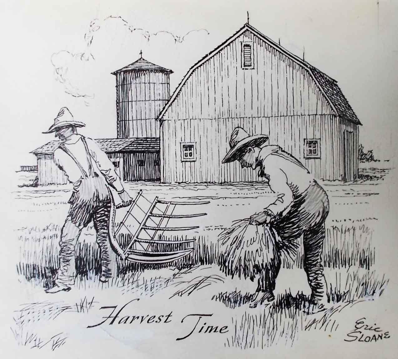 Harvest-time1.jpg 1,275×1,152 Pixels