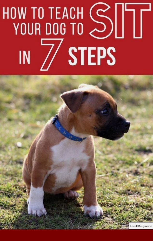 How To Train Dog To Stop Barking At Door And Pics Of Best Way To