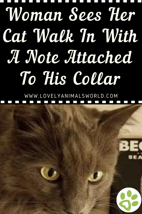 Woman Sees Her Cat Walk In With A Note Attached To His
