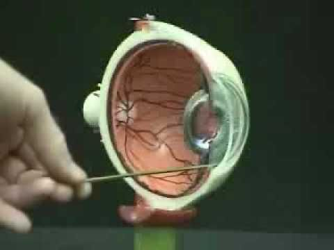 Video For Module 1 Basic Eye Anatomy At 437 He Displays The
