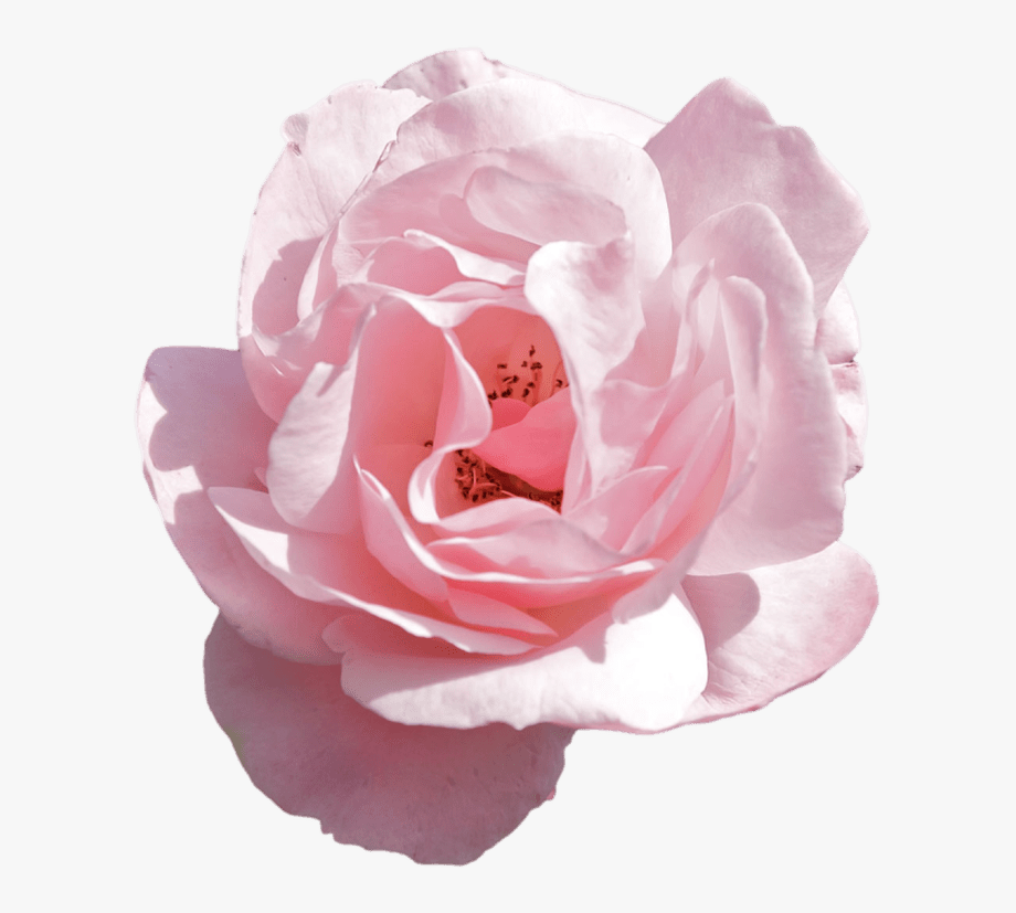 Transparent Aesthetic Flower Png Flower Drawing Tumblr Pink