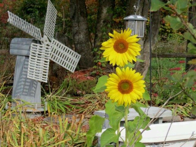 Little country flower garden