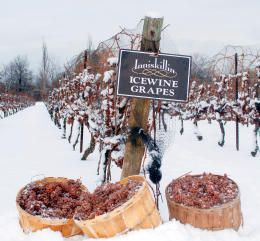 very, very good sweet wine. Eiswein or Ice Wine. Product of Germany , Austria and Canada
