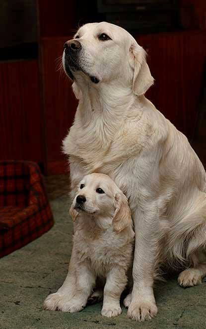 Like Mother Like Son Little Guys Baby Dogs Animals