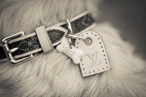 c3be90c614c Louis Vuitton dog collar