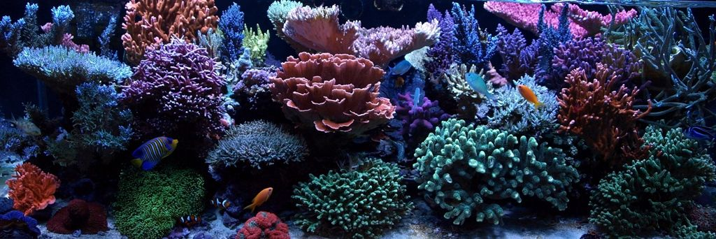 Worlds Best Tanks - Page 6 - UltimateReef.com