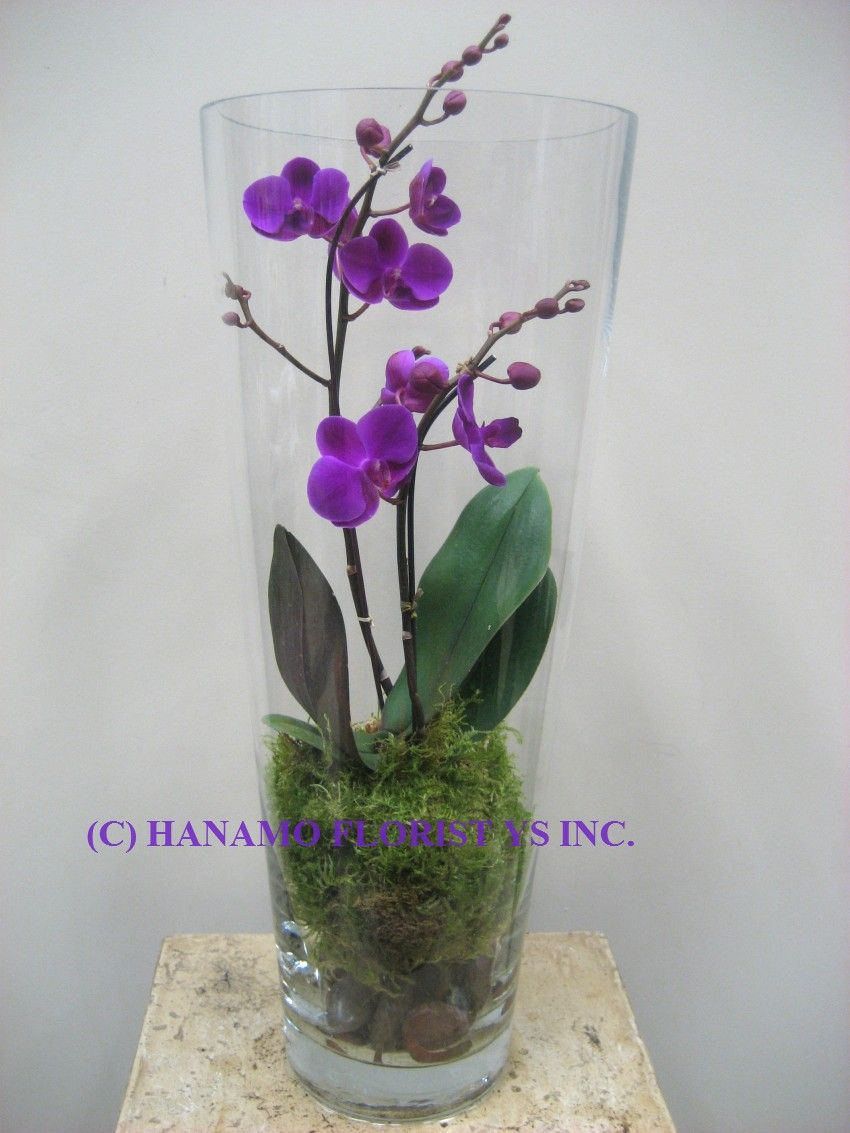 Orch014 orchid in the tall glass vase dreams do come for Vase weihnachtlich dekorieren