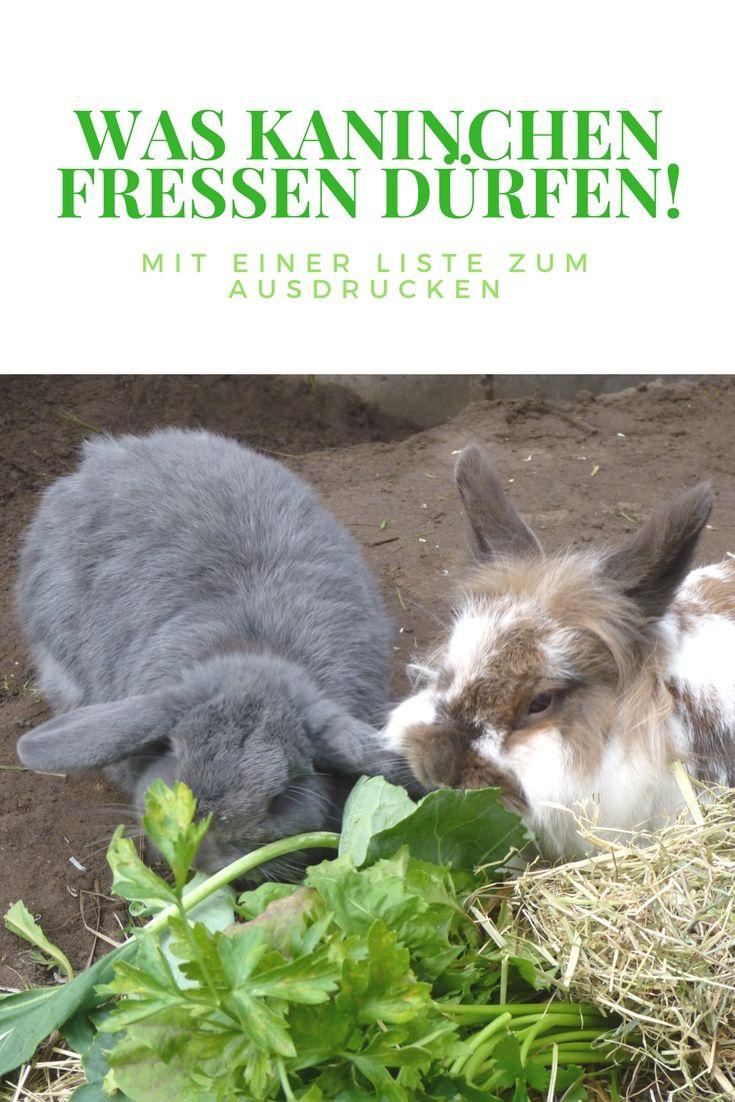 Kinder Und Kaninchen Was Muss Ich Beachten In 2020 Kaninchen Kaninchenhaltung Kaninchen Spielzeug