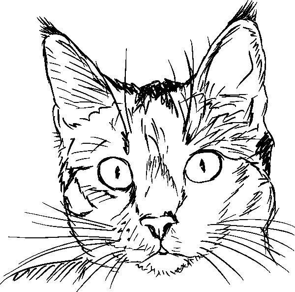 Disegno Da Colorare Testa Di Gatto Schizzi Di Animali Disegni Di Gatti Disegni
