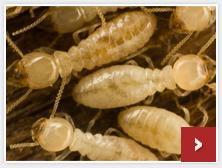 Bug Zero Pest Control Springfield Mo Cape Girardeau