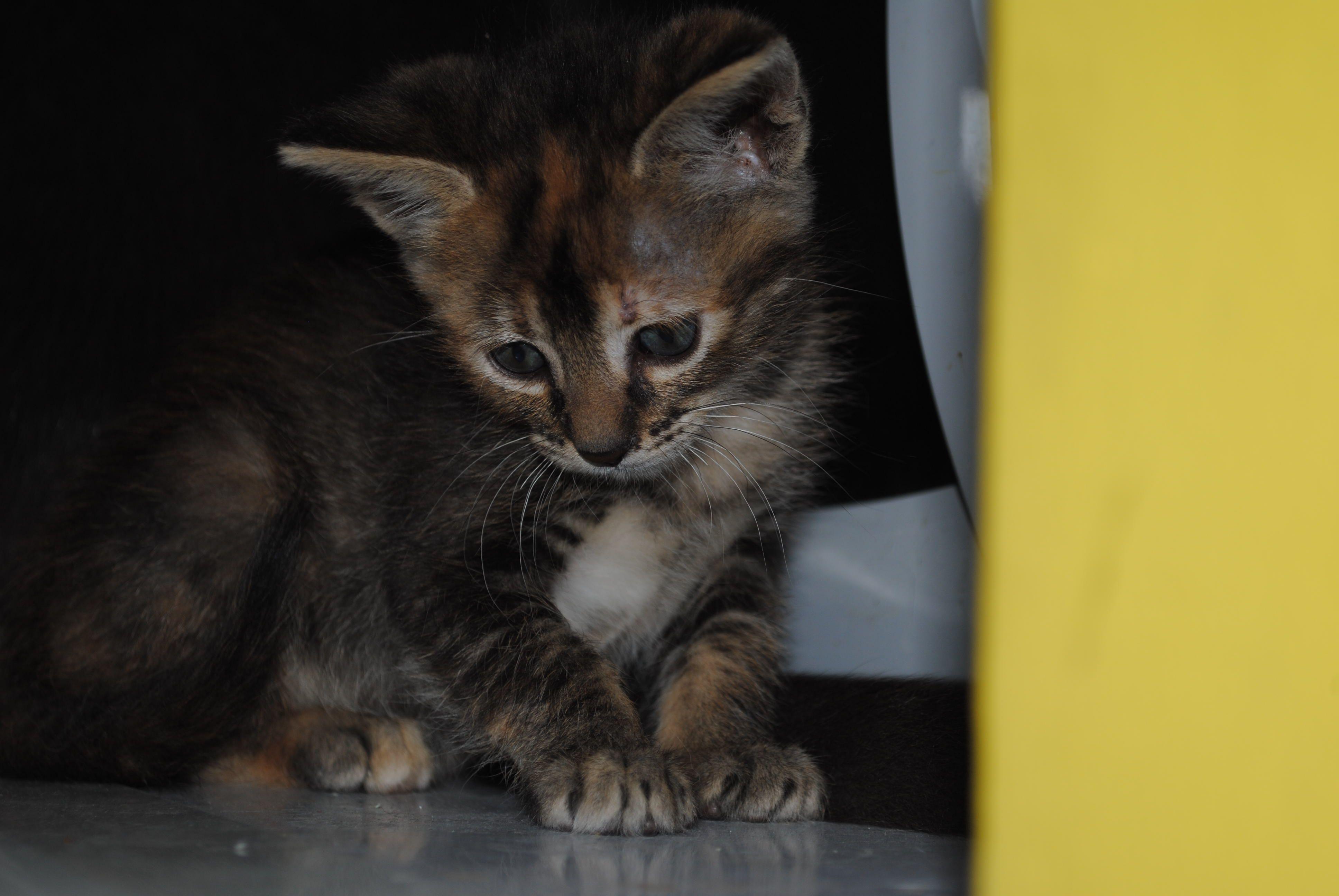 Luna #Cats #Gatos