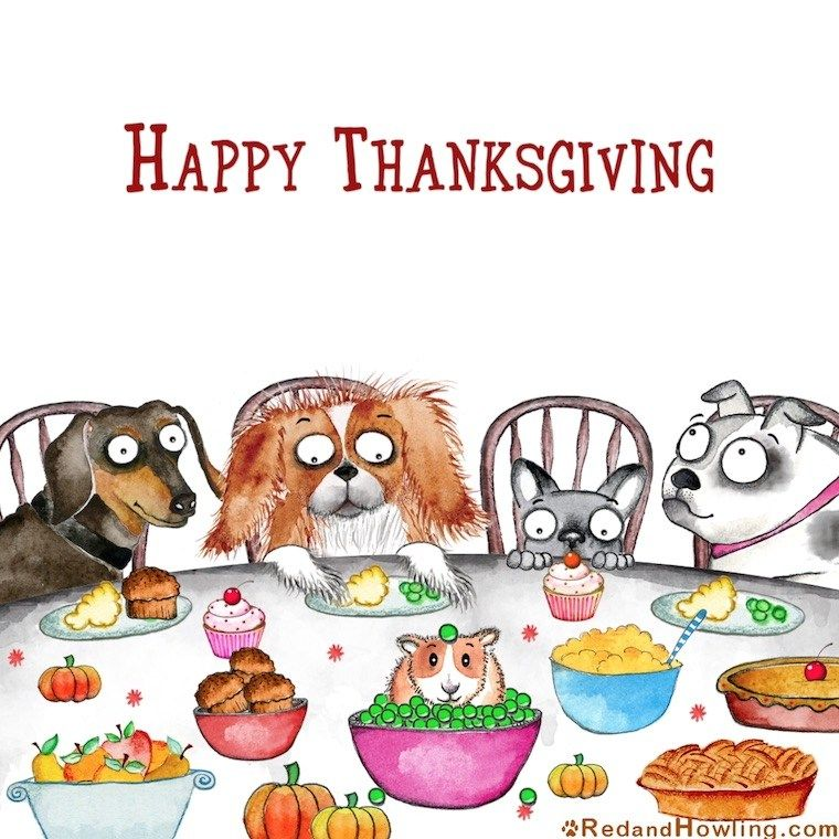 Happy Thanksgiving! Dog thanksgiving, Happy thanksgiving