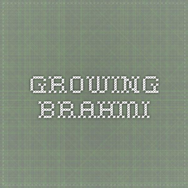 Harvest brahmi/bacopa through October/November. Dry leaves and grind into powder or make tea