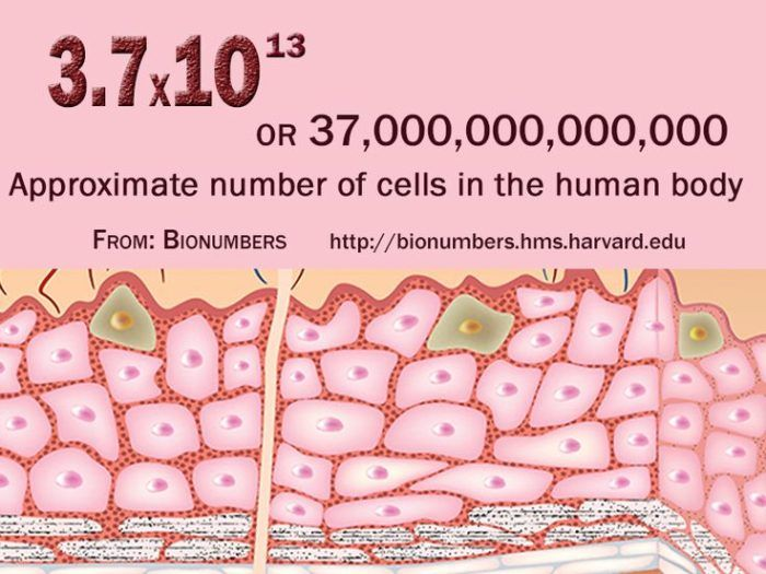 how many cells are in the human body compare number of cells in, Human Body