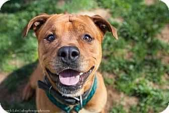 Adopt Cratos on Rescue dogs, Dogs, Pets