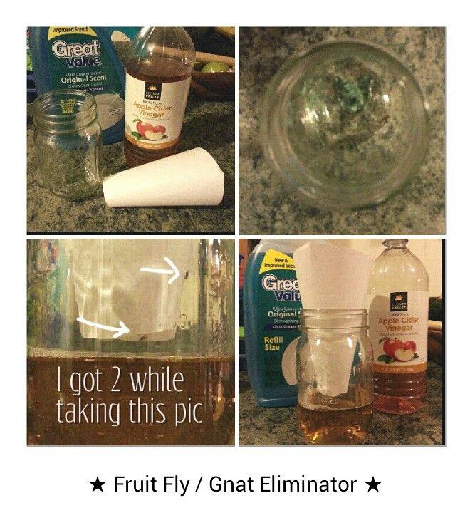 Best 25 Gnats In Kitchen Ideas On Pinterest Flies In