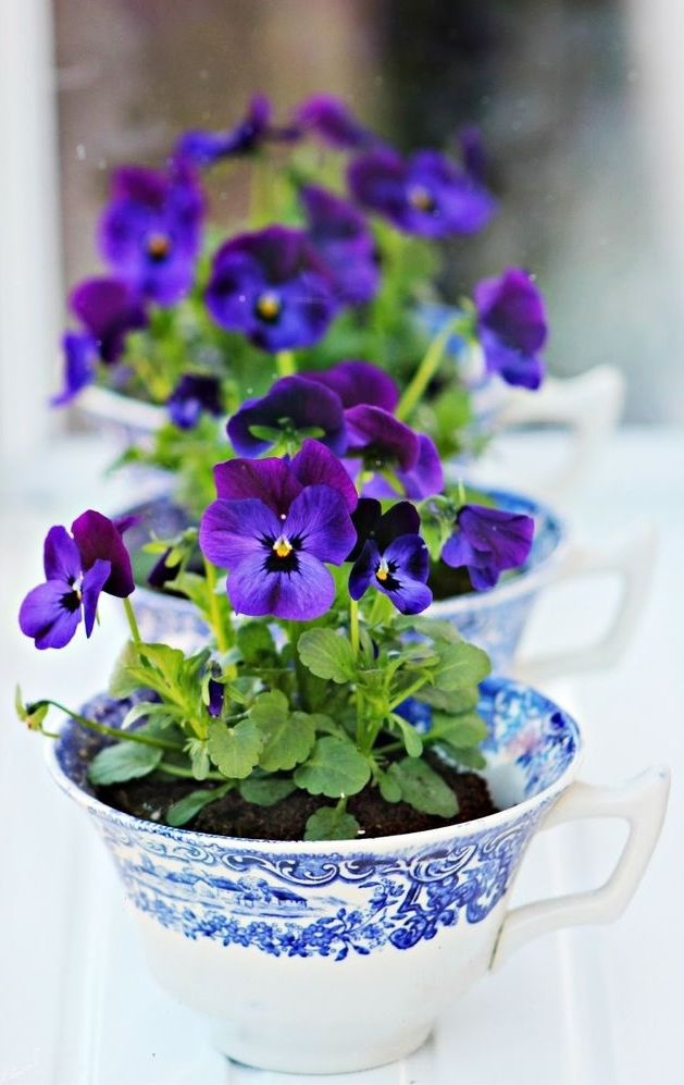 A Cup Of Pansies Teacup Gardens Flower Cup Pansies