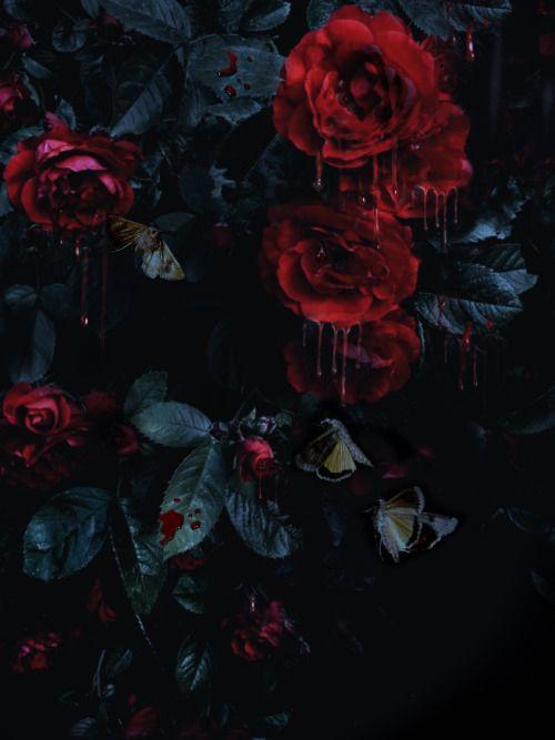 Falling Rose Petals Live Wallpaper Sliplead Da Merrill Flowers Dark Red Roses Red Flowers
