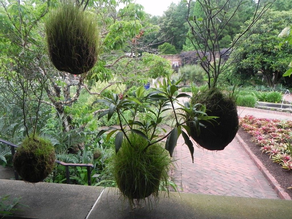 The kokedama moss balls in the middle were rolled in grass seed ...
