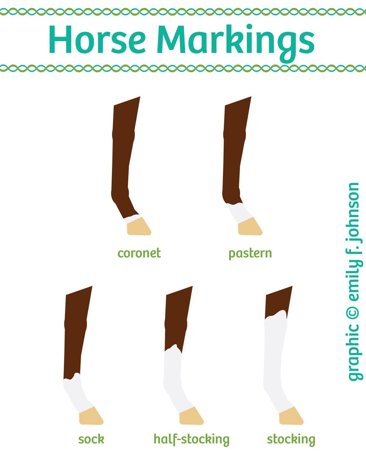 Horse Leg Markings Chart
