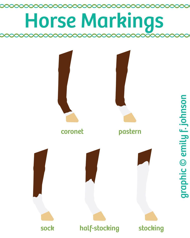 Horse Leg Markings Chart