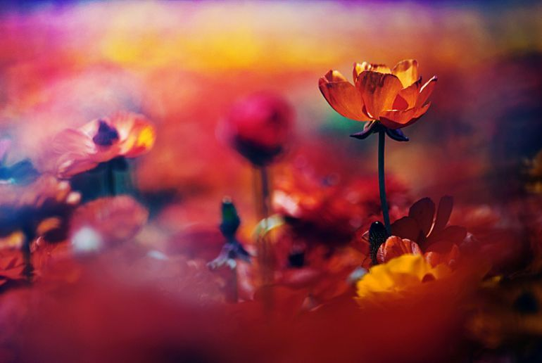 Guy Cohen color Photography