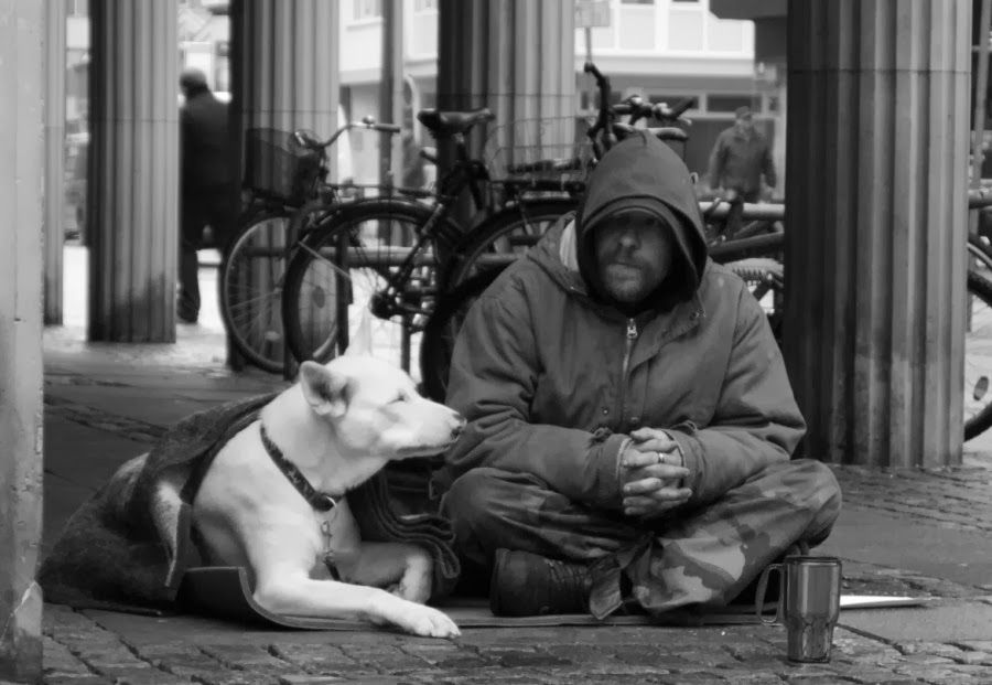 17++ Save a friend to homeless animals ideas in 2021
