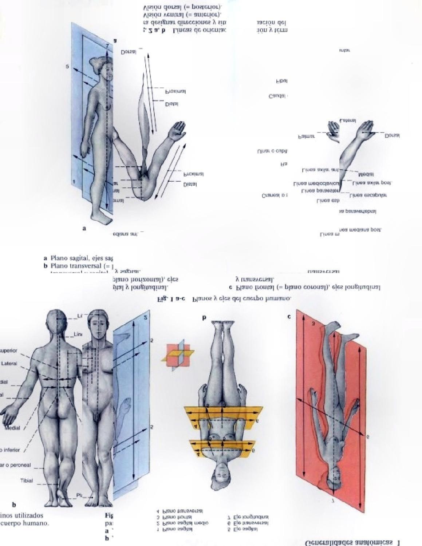 Anatomia Humana para Artistas | Anatomía humana, Anatomía y Artistas